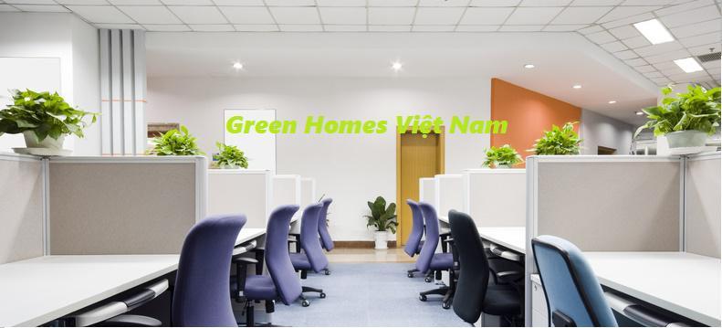 Dịch vụ cho thuê cây cảnh-cây xanh văn phòng tại hà nội